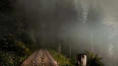 Morgennebel im Nationalpark Schwarzwald (MHikeBike) Tags: wald berge wasser bäume nationalpark schwarzwald nordschwarzwald murg murgtal baiersbronn huzenbach schönmünzach wandern wege ruhe berg radweg fahrrad weg