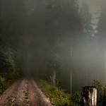Morgennebel im Nationalpark Schwarzwald thumbnail