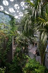 walkways (rovingmagpie) Tags: california sanfrancisco goldengatepark californiaacademyofsciences steinhartaquarium osherrainforest rainforest summer2018