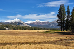 Toulumne Meadows (AgarwalArun) Tags: sony a7m2 sonyilce7m2 landscape scenic nature views easternsierra leaves autumn fallfoliage mountains snow mountain meadow tuolumnemeadows cliffs yosemite yosemitenationalpark nationalpark tiogapassroad