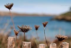 Un  automne  à la mer ... (Eric DOLLET - Ici et ailleurs) Tags: ericdollet bretagne st lunaire