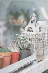 S__88006665 (enchanted.fairy) Tags: background beautiful botanical botany cacti cactus collection decor decoration decorative design flora floral flower fresh garden gardening green grow growth hipster hobby home house houseplant indoor interior isolated leaf natural nature plant plants pot pots potted room rustic scandinavian small space succulent succulents table top view vintage wall white wooden