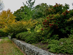 Another view of Tower Hill Botanic Garden (lovesdahlias 1) Tags: towerhillbotanicgarden botanicgardens gardens foliage berries fall nature stonewalls newengland