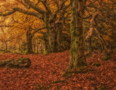 A carpets cushion (xDigital-Dreamsx) Tags: trees woodland wald woods leaves forest countryside nature landscape sunlight sunshine sun log eos day autumn fall