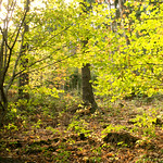 Wald im Oktober - Forest in October thumbnail