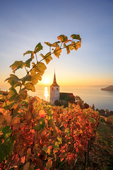 Ligerz at Sunrise (Rogg4n) Tags: switzerland twann bienne biel lake bern vine vineyard autumn automne fall leaf village landscape canoneos80d efs1018mmf4556isstm season 2017 morning warm nature ligerz festi ìlesaintpierre church gléresse