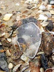 84234556 (aniaerm) Tags: sea coastalfinds sand