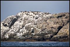 2018_июль_Поной_3_114 (Snowman_pro) Tags: flight kolapeninsula nord sea summer water вода кольскийполуостров лето море полёт сосновка белоеморе whitesea