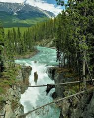 SUNWAPTA FALLS (Rob Patzke) Tags: waterfall whitewater mountain tree logs pines rock rockies lx100 lumix panasonic stone rapids island rushing waves blue green