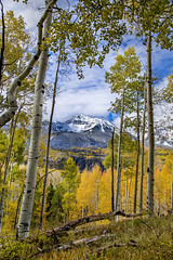 View through the trees (BDFri2012) Tags: aspentrees mountain snow fallcolor fallcolors fall view forest clouds telluride colorado mtwilson landscape outdoors outside viewpoint