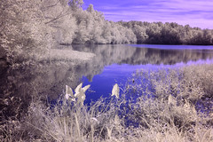 Hike to the Lake (Neal3K) Tags: ir infraredcamera kolarivisionblueirndvifilter henrycountyga georgia cubihatchaoutdooreducationcenter