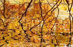 Golden Leaf Reflection (Stanley Zimny (Thank You for 33 Million views)) Tags: autumn fall 4 seasons four gold yellow ripple reflection water abstract