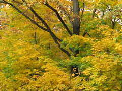 tree in autumn (VERUSHKA4) Tags: vue view ville city moscow nature trunk bough branch day october autumn yellow leaf leaves canon beautiful europe russia color colour season