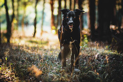 (Xetae) Tags: dogphotography dog bordercollie sheepdog workingdog workingsheepdog pet petphotography caninephotography animalphotography animal canine collie