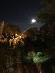 Les lutins se promènent les soirs de pleine lune... (woltarise) Tags: jardin arrosage femme marseille soir lune france hipstamatic iphone7 streetwise