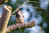 Garden Bird-1034
