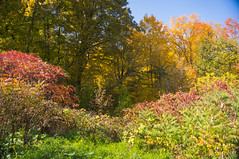 Fall around the Green Creek Corridor, Ottawa 2018 (lezumbalaberenjena) Tags: green greenbelt creek fall automne autumne autumn otoño lezumbalaberenjena 2018