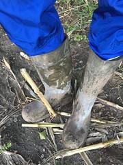 My green Dunlop Purofort+ work boots (Noraboots1) Tags: dunlop dunlops purofort wellies rubber boots engelbertstrauss gummistøvler gummistiefel