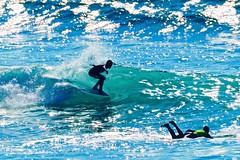 IMG_6943 (palbritton) Tags: surf surfing surfer singlefin longboard longboardsurfing surfcontest