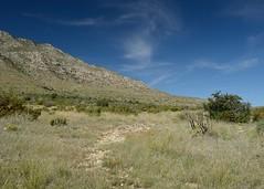 2018-09-30 Guadalupe Mountains NP 7 (JanetandPhil) Tags: 2018naturepreservesvariouslocations 20180910artxaznmvacation guadalupemountainsnationalpark guadalupemountains nationalpark smithspringtrail nikon nikkor d4 2470mmf28 manzanitaspring
