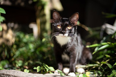 猫 (fumi*23) Tags: ilce7rm3 a7r3 animal katze gato neko emount 85mm fe85mmf18 sel85f18 cat chat kitten alley street ねこ 猫 ソニー 仔猫
