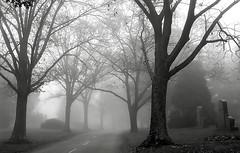 Cincinnati Ohio - Spring Grove Cemetery & Arboretum (David Paul Ohmer) Tags: spring grove cemetery arboretum cincinnati ohio springgrove cemetary foggy road
