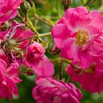 DSC_8985 thumbnail