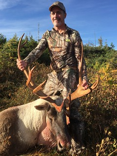 Newfoundland Caribou Hunt, Moose, Bear Hunting  7