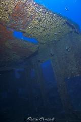 IMG_1375 (davide.clementelli) Tags: diving dive dives padi immersione immersioni ampportofino portofino liguria friends amici underwater underwaterlife sottacqua