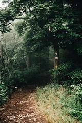 """i'll be the lonely wolf, i'll follow wherever you go."" (lina zelonka) Tags: jena germany europe linazelonka thüringen thuringia thueringen thuringen vertical forest wald path trial weg wanderweg nikond7100 18140mm green grün misty mist deutschland"