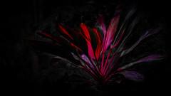 rc_wildlife_11 (R.C. Reshel) Tags: wildlife animals tiere aquarium bauernhof ozean säugetiere vögel insekten schmetterlinge fische dschungel pflanze roteblätter dschungelpflanze