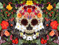 Calavera (Apionid) Tags: calavera skull october autumn flowers mirror werehere hereios nikond7000 dahlia begonia floral spooky diademuertos dayofthedead