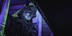 _DSC9253 (Pherit) Tags: autumn creepy fall hag halloween ny newyork syracuse vvitch witch yardhaunt haunt scare