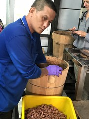 Turning the Fermenting Cacao Beans (mytripsandraces) Tags: taiwan 2018 internationalchocolateawards cacao chocolate