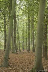 DN9A6161 (Josette Veltman) Tags: photowalk overijssel vechtdal nederland herfst bos forest autumn canon