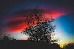 Late evening ... (Julie Greg) Tags: nature nautre sky colours canon clouds tree england kent sunset