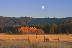 Autumn Moonrise 2146 A (jim.choate59) Tags: moon autumn fallseason moonrise glenwoodwashington jchoate klickitatcounty field fence rural landscape golden magichour goldenhour forest woods hills mountains d610 hff