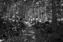 forest shadows I (cyberjani) Tags: mountains alps valley trenta wood tree forest landscape park rock mountain water mountainside grass sky bw