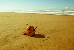Found on Balinese shore (Monika Kalczuga (on&off)) Tags: bali indonesia asia beach sand nature shore coastline pekutatanbeach kelaparetreatspa indianocean ocean costline coconut sky water