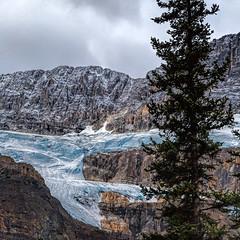 Glacier (docoverachiever) Tags: mountains glacier tree ice snow landscape scenery canadianrockies icefieldsparkway banffnationalpark canada alberta squareformat