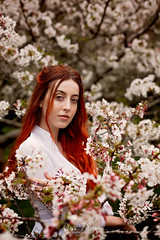 Do you remember the cherry blossom in the market square (Russ Dixon Photography) Tags: russdixon russdixonphotography boho portrait portraitphotography location godox ad600 newzealand newplymouth taranaki cherry blossom model beautiful redhead