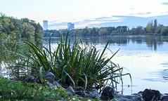 BS, Natur am Südsee (bleibend) Tags: 2018 em5 leicadgsummilux25mmf14 omd braunschweig bs flower flowers fluss herbst herbstfarben landschaft m43 mft natur nature niedersachsen oker olympus olympusem5 olympusomd südsee