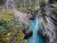 DSC03120 (MarilynSJ) Tags: athabasca falls