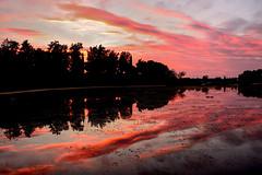 Reddish strands ... (Raquel Borrrero) Tags: sunset twilight sky red crepúsculo atardecer sunshine cielo plant plantas evening shadows colorful natura reflection