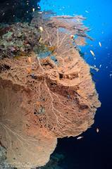 DSC_4574 (bajo_el_mar) Tags: 2018 marrojo underwater fotosub
