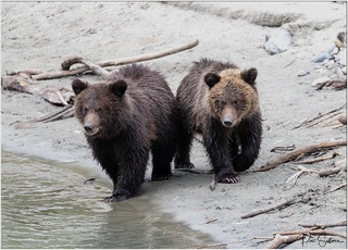 Grizzly Family-006