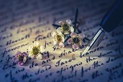 Love Letter (Ro Cafe) Tags: intendedcontact loveletter mm macro macromondays writing fountainpen letter script flowers nikkormicro105f28 sonya7iii