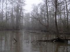 fog24mar10 (tanyapavlicapschyrembel) Tags: