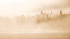 'Mist Opportunity' No. 3 (Canadapt) Tags: mist fog lake shoreline trees keefer canadapt