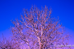 Day 14 (Sudha Karthik Photography) Tags: 365 365project 365daysphotochallenge day14 spring canon 5dmarkiii melbourne australia sudhakarthik photoshop tree sky nature